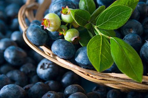 野蓝莓的果汁可提供心脏保护作用并且还可以改善2型糖尿病患者的血压