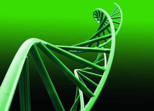 研究人员发现具有抗癌特性的抗菌肽
