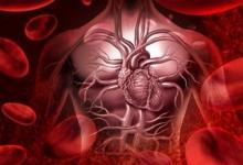 VEGF-B生长因子可以刺激心脏中新血管的生长