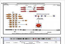 IGF2在乳腺癌肿瘤和乳腺癌细胞中的表达