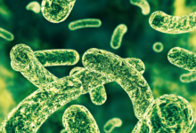 研究发现益生菌可以抵消压力对免疫系统的有害影响