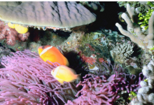 研究发现沿海生态系统中的植被可以减轻海洋酸化