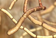农业土壤中的真菌菌株可能具有除草剂的潜力