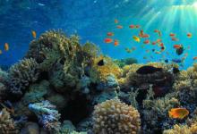 最新研究表明小鱼通过保持清洁对珊瑚礁健康至关重要