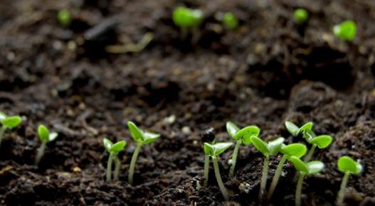 磷酸盐岩被证实是酸性土壤的有效肥料