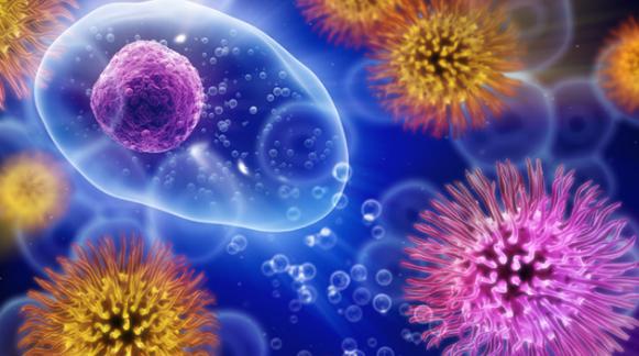 研究表明噬菌体可用于治疗食源性病原体并减少食物中毒