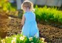 从水仙花中提取的天然生物碱具有抗癌作用
