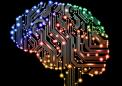 研究人员展示了飞蛾的大脑比人工智能更聪明