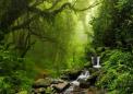 亚马逊雨林树木被证明具有惊人的抗旱性
