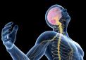 细胞中钙过多可能会增加患帕金森氏症的风险