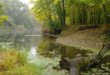 流域湿地综合体减轻了肥料流失带来的过量硝酸盐