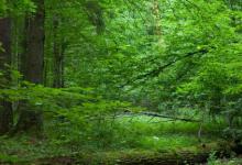 生物多样性的丧失可能使整个生态系统面临灭绝的危险