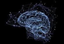 研究人员揭示大脑的组织方式