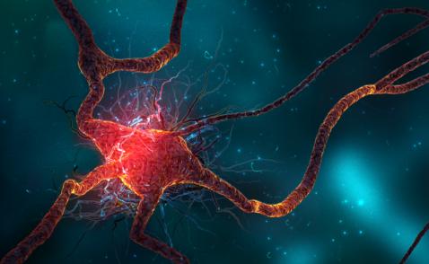 深经颅磁刺激已用于治疗整个神经系统疾病和精神疾病