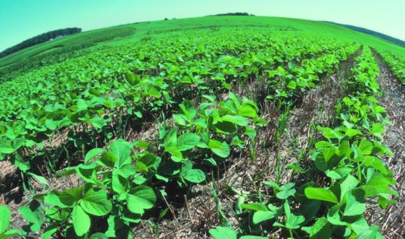 有机耕作可以减少玉米和豆类作物中的植物寄生线虫