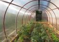 用于温室的新型薄膜可分解光以增强光合效率并提高农作物产量