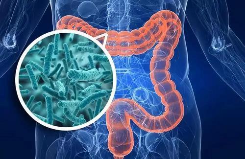研究人员发现肠道中与肠易激综合症相关的特定细菌
