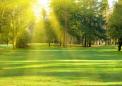 研究发现住宅周围的绿色植被减少了许多常见疾病的风险