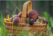 3个简单的步骤可以确定您是否在野外发现了可食用的东西