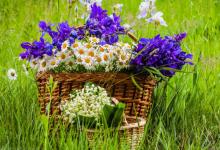 研究人员发现了一种可以改善阿尔茨海默氏病患者大脑功能的花