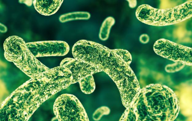 研究表明益生菌有助于逆转胃肠道不适和抑郁症状