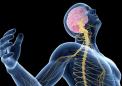 研究人员发现免疫细胞有助于清除损伤并且还可以在受伤后重建神经