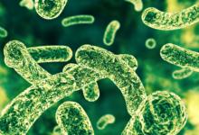 研究发现健康的肠道细菌可减轻抑郁症