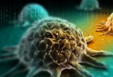 来自墨西哥和中美洲的民间药用植物被发现具有抗癌潜力