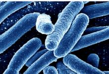 研究发现超级细菌可以吞噬竞争对手 然后抵抗所有已知的抗生素