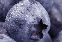 蓝莓提取物可改善接受宫颈癌放射线治疗的妇女的健康状况