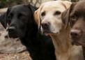 狗被证明可以通过精确的嗅觉识别自己