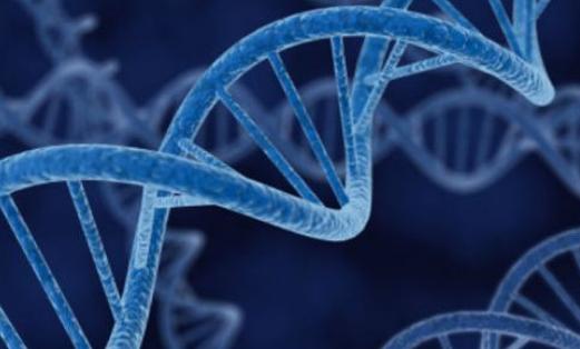科学家发现蠕虫DNA可以使人类再生四肢