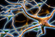 研究发现导致脑部疾病蛋白质结块的新机制