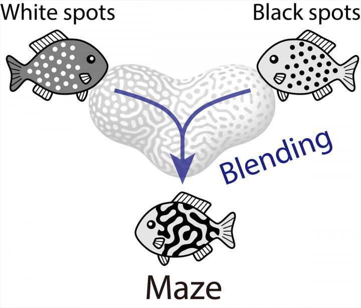 研究人员发现动物是如何获得复杂的色彩