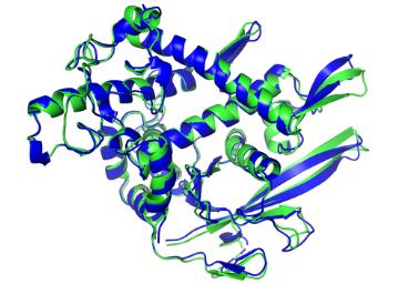 人工智能在解决蛋白质结构方面取得了胜利