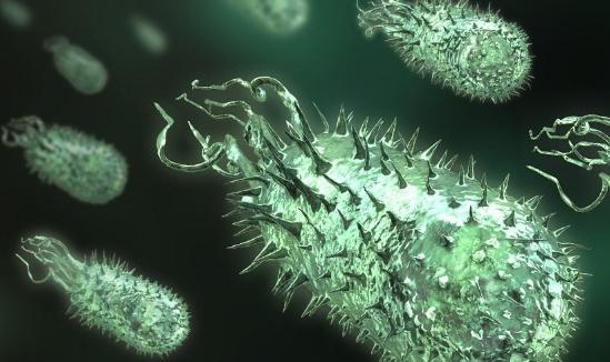 自从我们成为人类之前某些细菌就已经存在于肠道中