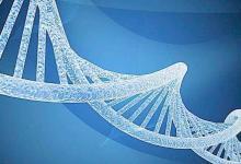 出生体重与母亲和婴儿的遗传因素有关