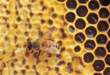 科学家开发了一种可以轻松测量蜂蜜中农药的新方法