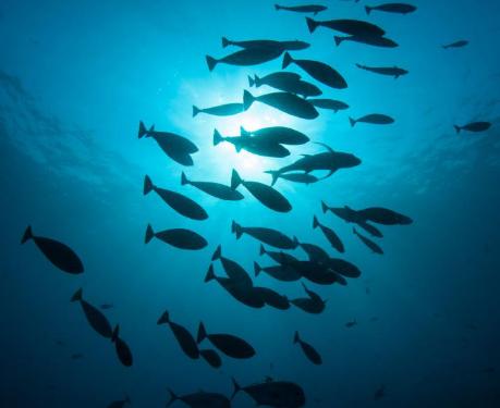 研究显示死鱼将有毒汞带到海洋最深处