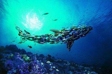 新报告详细介绍了广泛的海洋污染与人类健康风险之间的联系