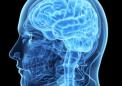 研究人员探索了喜马拉雅杜松的增脑潜力