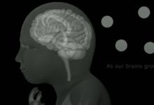 研究人员在发育中的皮层中使用连接组映射来发现发育接线规则