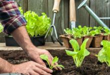 提高二氧化碳浓度可以减少干旱对农作物的负面影响