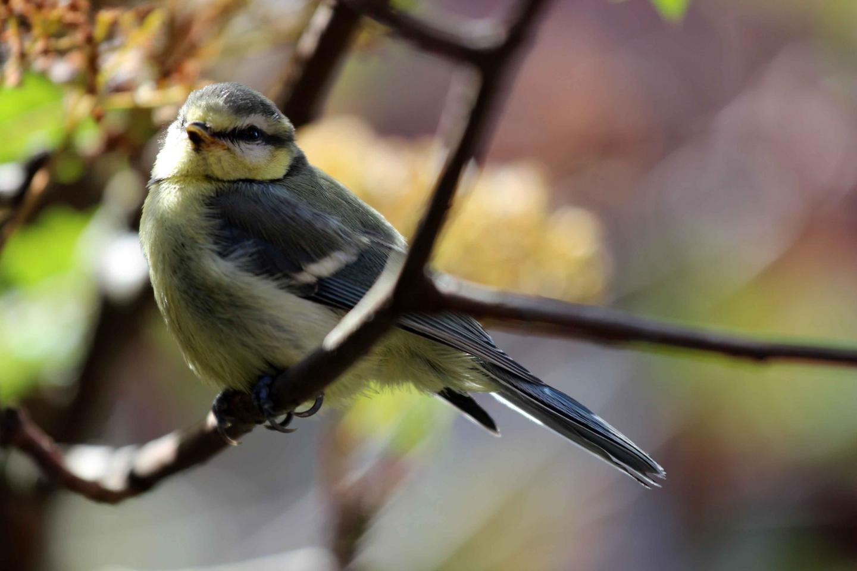 研究发现附近的鸟类越多欧洲人的对生活满意度越高