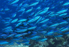 非营利组织正在清理大太平洋垃圾场中的塑料垃圾