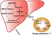 研究人员在代谢机制中发现隐藏结构