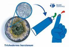 RUDN大学的医生用木霉属的代谢产物创造了一种伤口愈合凝胶