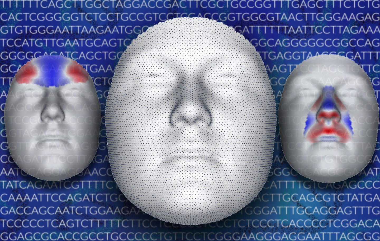 人脸的遗传学开始揭示潜在的特征