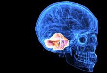 神经母细胞瘤细胞中的还原应激会聚集蛋白质并损害神经发生