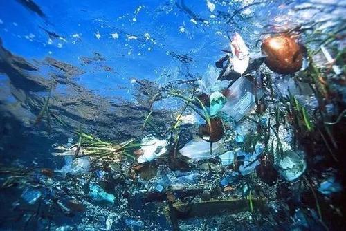 有毒污染物会影响野生动物疾病的传播